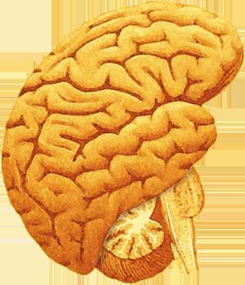 Logo Neuvacod